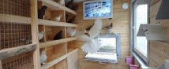 Обустройство голубятни внутри. 9 фото примеров