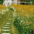 Луговой газон. 8 фото в ландшафтном дизайне