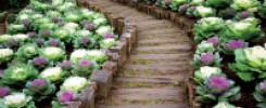 Как красиво посадить грядки в огороде: 10 сногсшибательных идей!!!