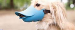 Смешные намордники для собак. 10 веселых фото