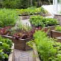 Красивые грядки в саду. ТОП 12 лучших фото