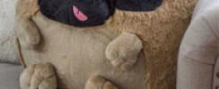 Подушка в форме собаки: 10 лучших моделей + фото обзор