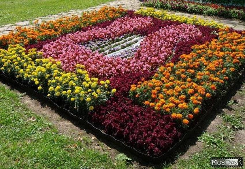 картинки клумбы с цветами квадратной формы того, люди